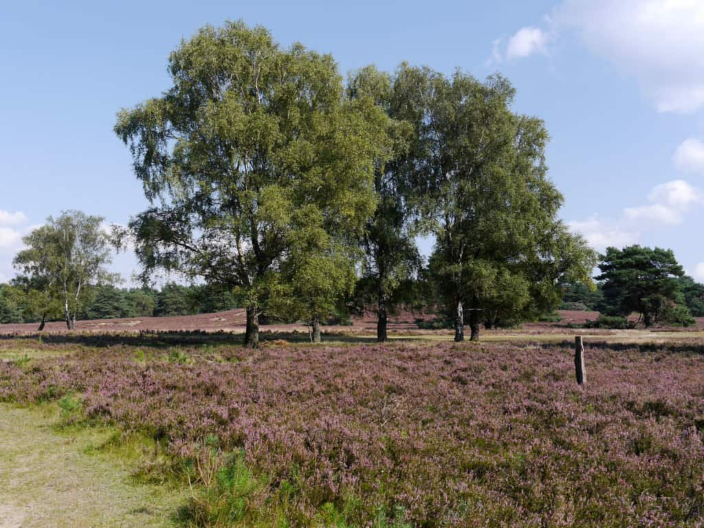 Typisches Landschaftsbild in der Fischbeker Heide im Süden Hamburgs | Foto: FOLLOW ME Hamburg